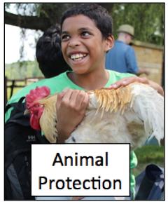 animal pro