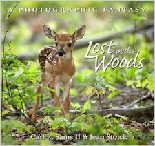 lost in the woods a photographic fantasy