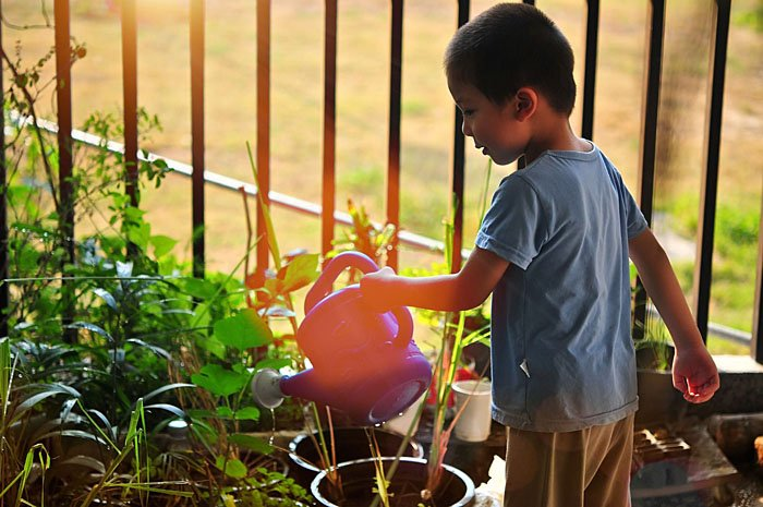 School Gardens, Community Empowerment, and Food Sovereignty